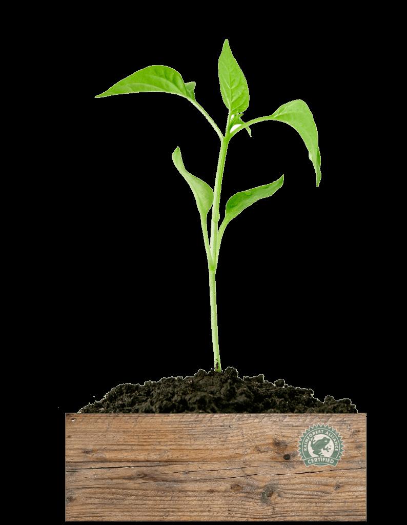 Plant_Alliance_Blanco_Royal